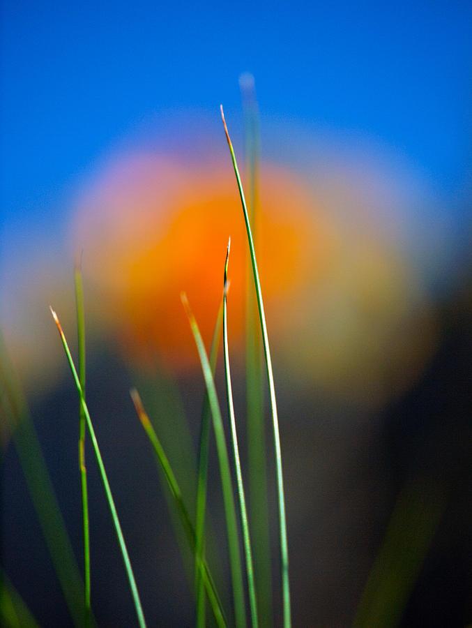 Flora Photograph - Papyrus by Joe Schofield