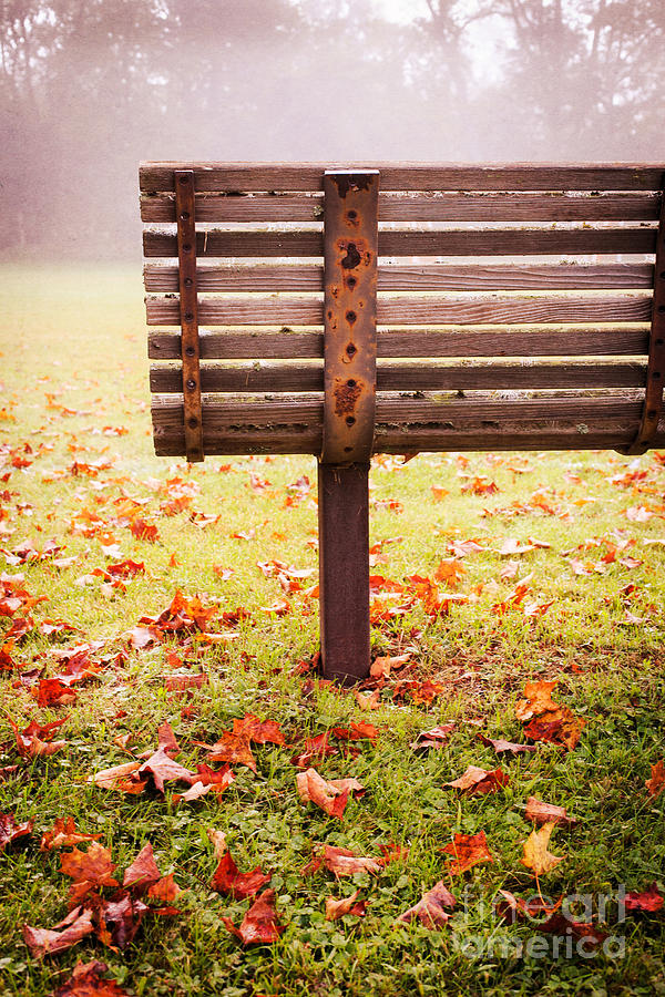 Park Bench In Autumn Photograph  - Park Bench In Autumn Fine Art Print