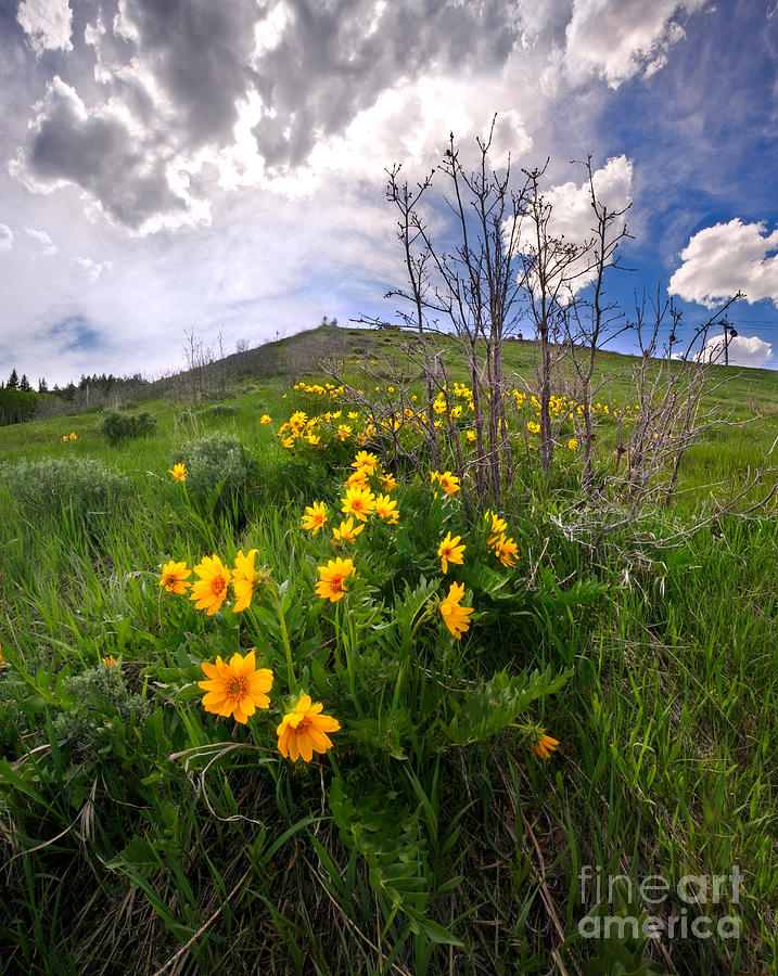 Park City Slopes In Spring Photograph
