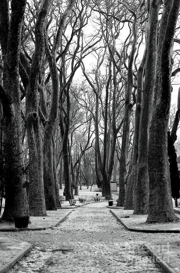 Park Path Photograph