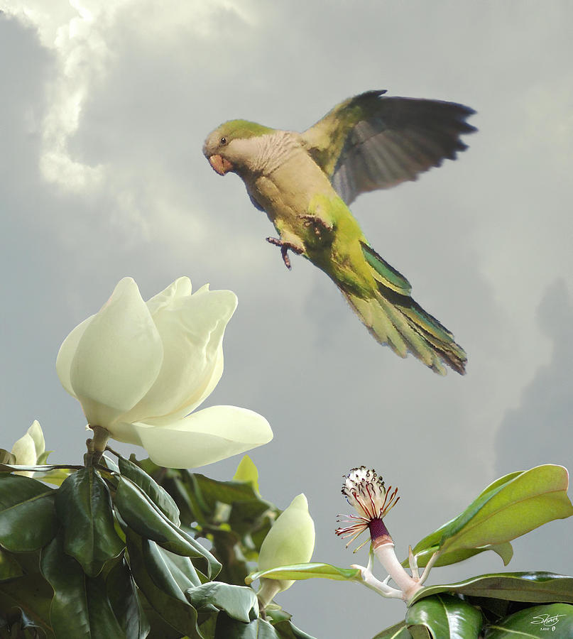 Parrot And Magnolia Tree Digital Art