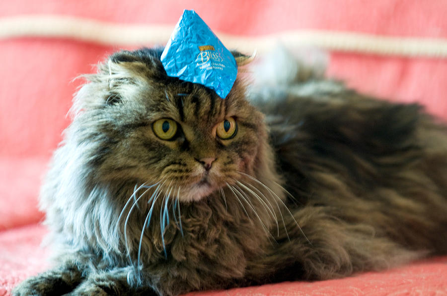 Party Cat Photograph