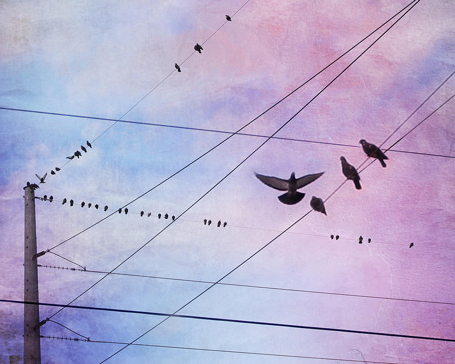 Birds On Wire Photograph - Party Line by Amy Tyler
