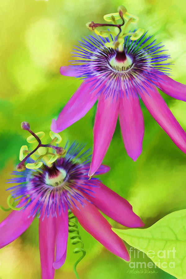 Passiflora Piresii Vine  - Passiflora Twins Digital Art  - Passiflora Piresii Vine  - Passiflora Twins Fine Art Print