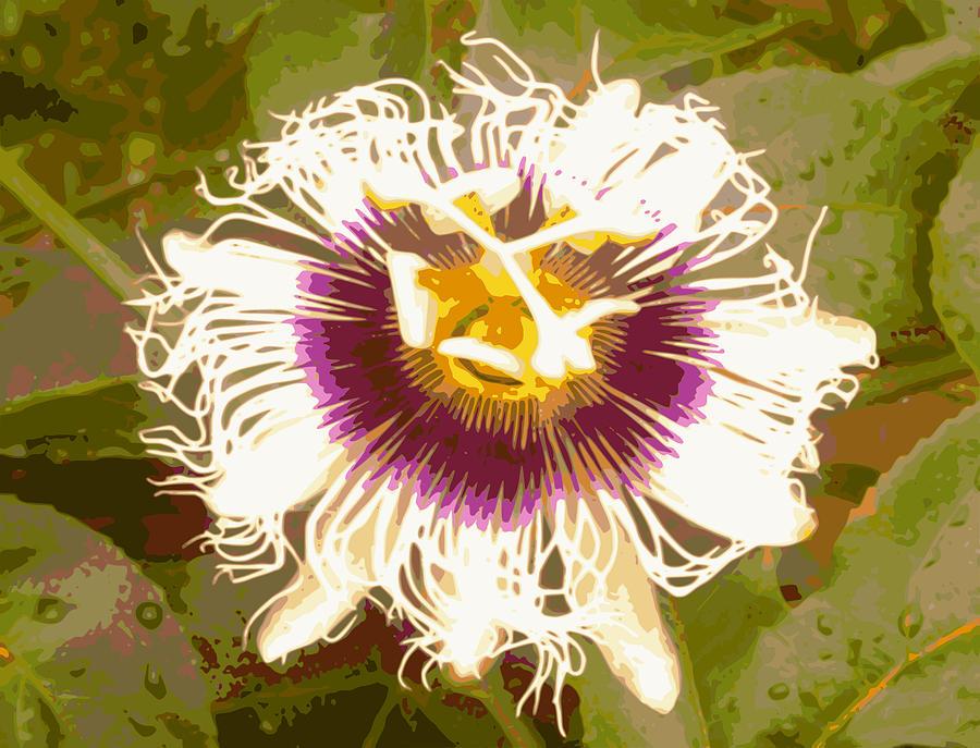 Passion Fruit Flower Photograph
