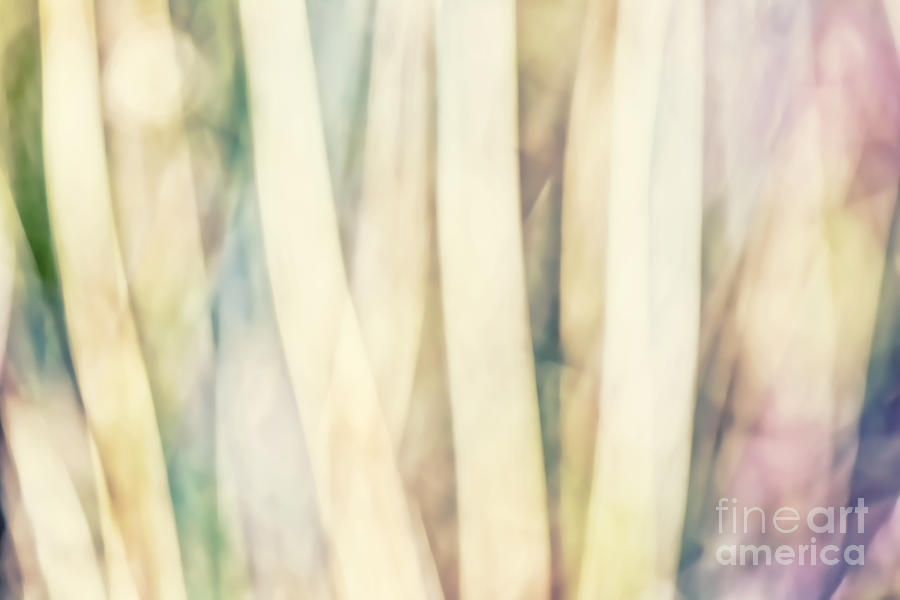 Pastel Forest Wild Grasses Photographic Abstract Photograph