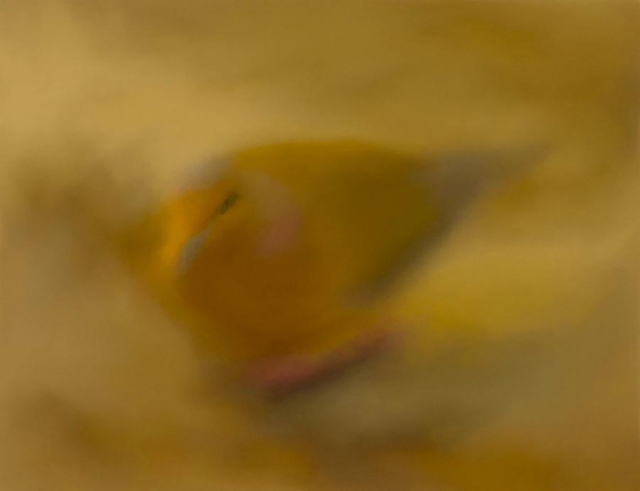 Pastel Illusion Photograph