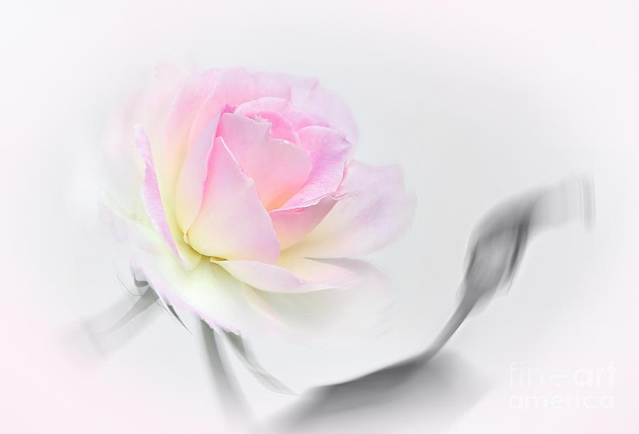 Pastel Passion Photograph