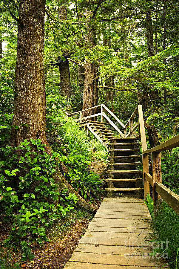 Path In Temperate Rainforest Photograph  - Path In Temperate Rainforest Fine Art Print