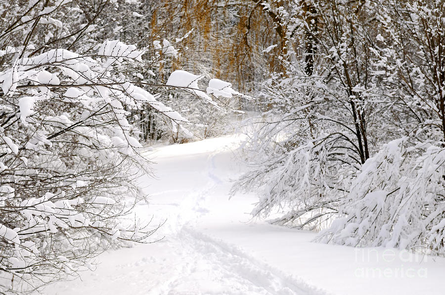 Path In Winter Forest Photograph
