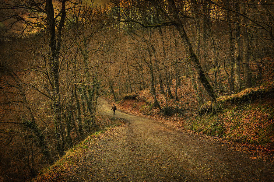 Woods Photograph - Path by Taylan Soyturk