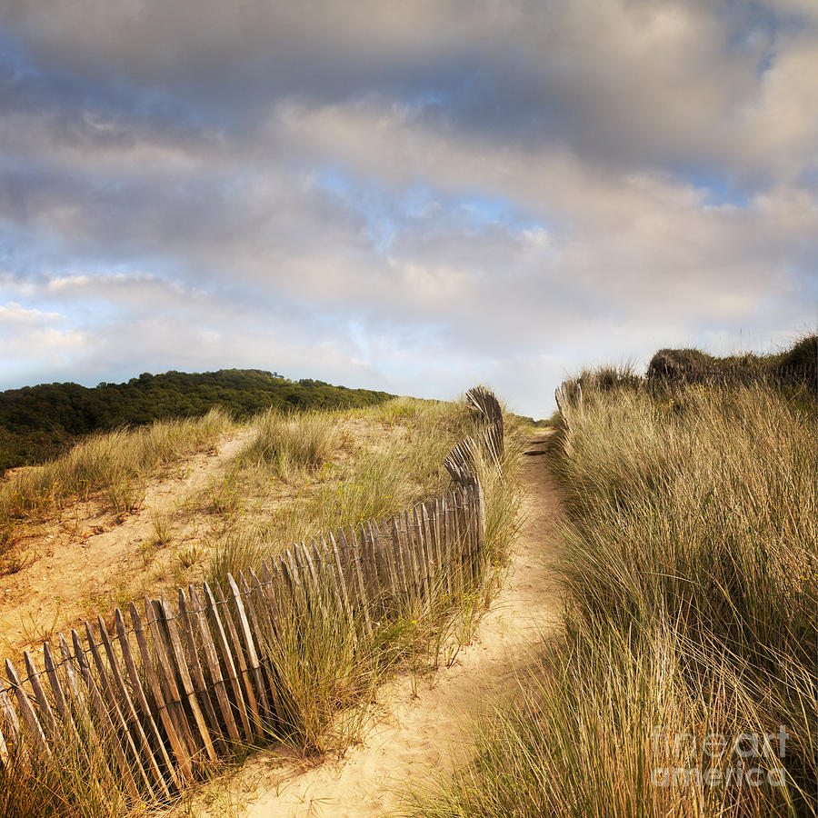 Path Through Dunes Photograph  - Path Through Dunes Fine Art Print