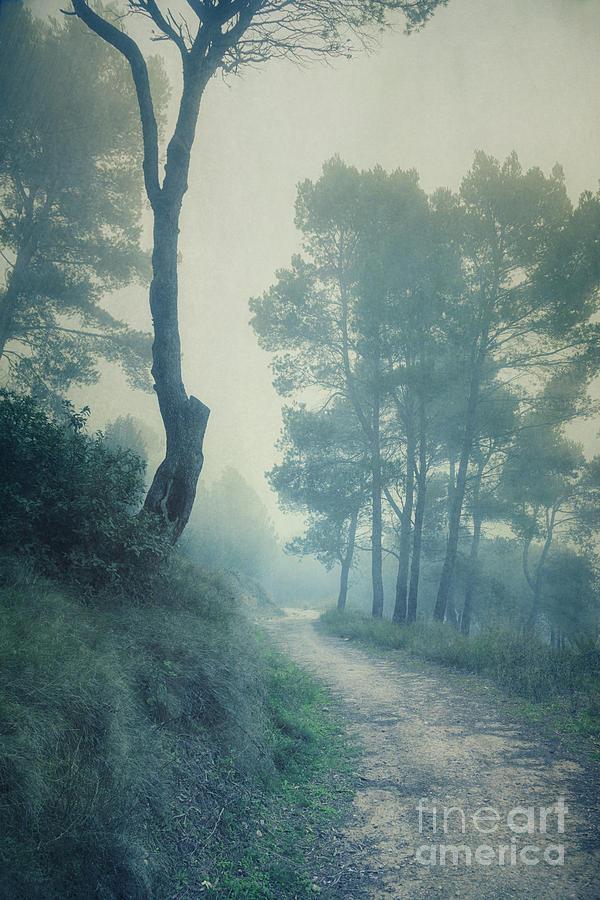 Path Through Pinewood Mist Photograph