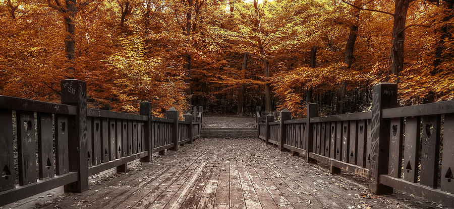 Path To The Wild Wood Photograph  - Path To The Wild Wood Fine Art Print