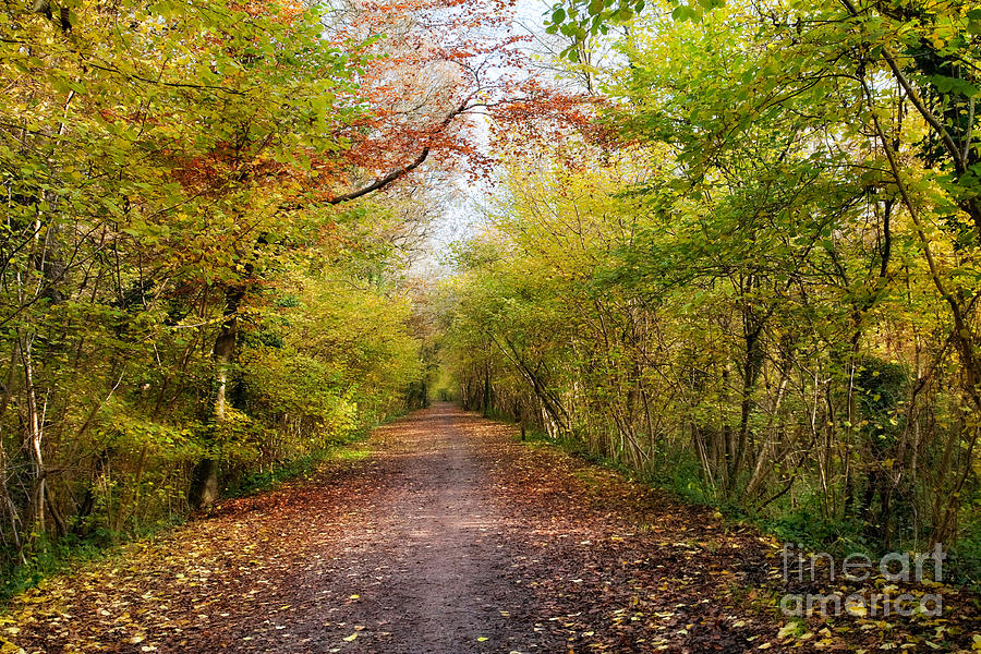 Pathway Through Sunlit Autumn Woodland Trees Photograph  - Pathway Through Sunlit Autumn Woodland Trees Fine Art Print