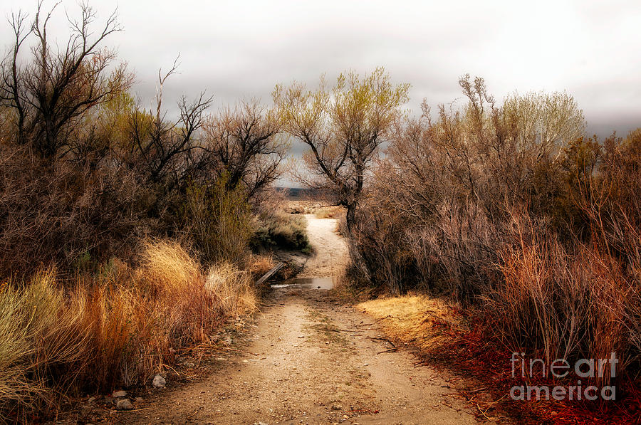 Pathway To Numen Photograph