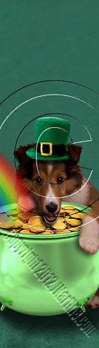 Patricks Day Sheltie #384 Photograph