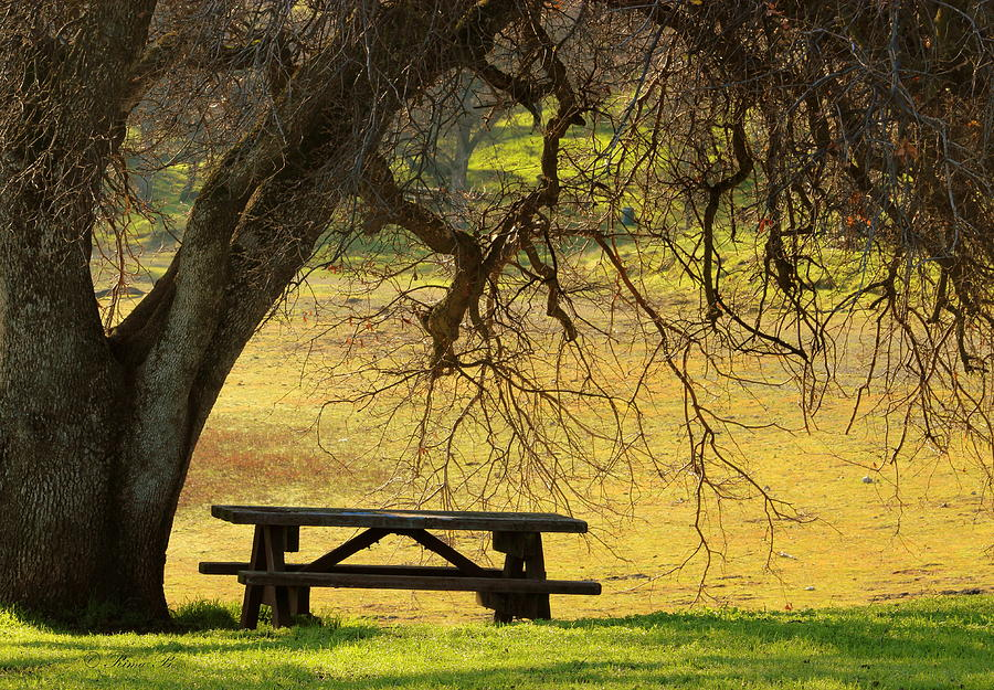 Tree Photograph - Peace  by Rima Biswas