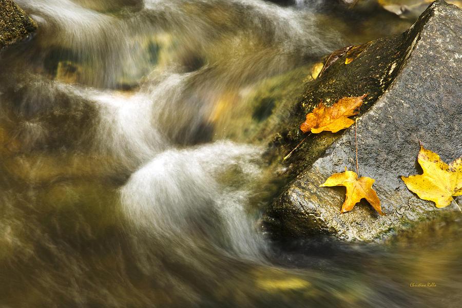 Peaceful Creek Photograph