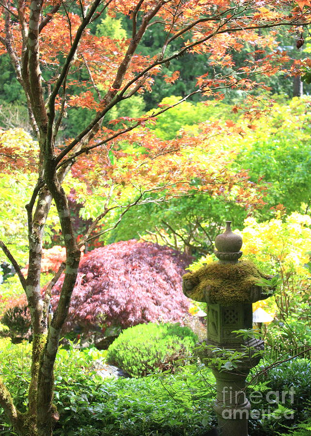 Peaceful Japanese Garden Photograph By Carol Groenen