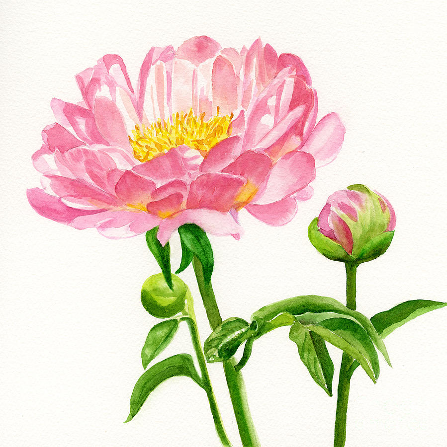 Peach Colored Peony With Buds Painting