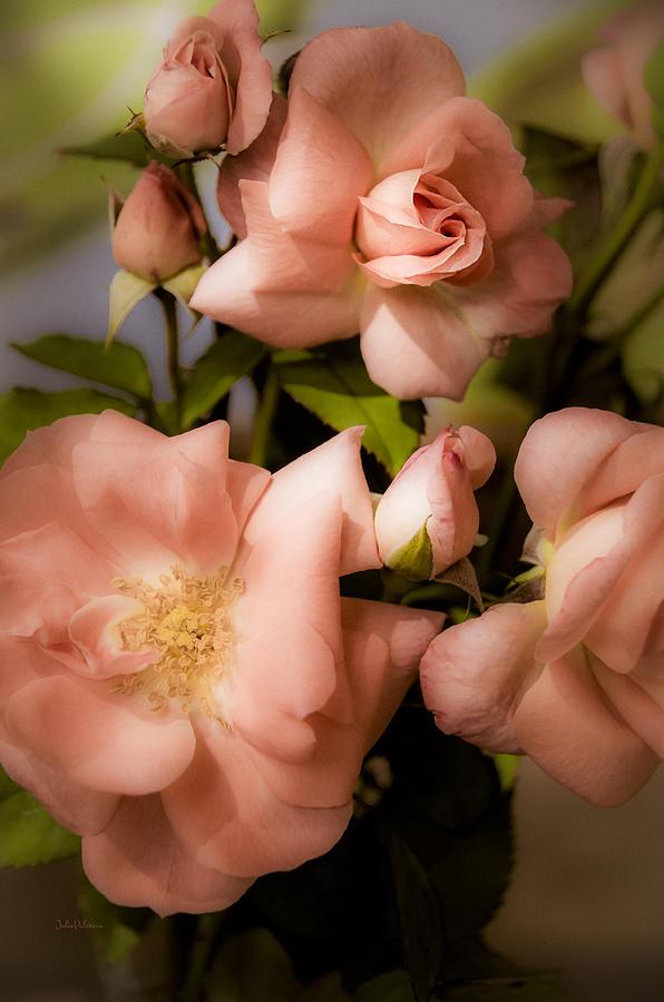Peach Floribunda Roses Photograph