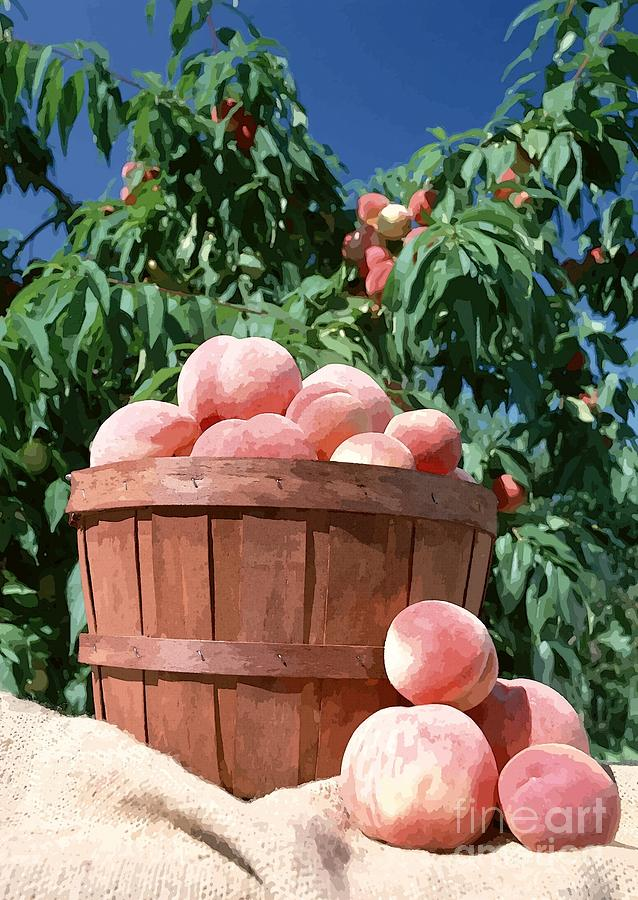 Peaches In Bushel Basket Photograph  - Peaches In Bushel Basket Fine Art Print
