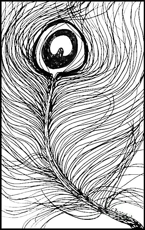 Peacock Feather Sketch In Ink Abstract Feather Drawings