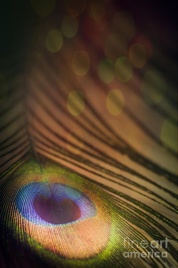 Abstract Photograph - Peacock Party by Jan Bickerton