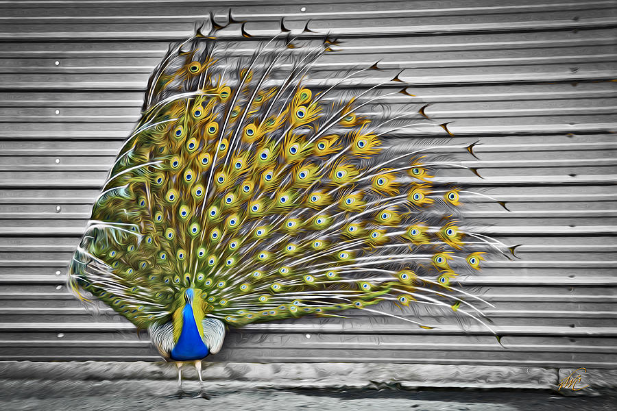 Peacock Photograph - Peacock by Williams-Cairns Photography LLC