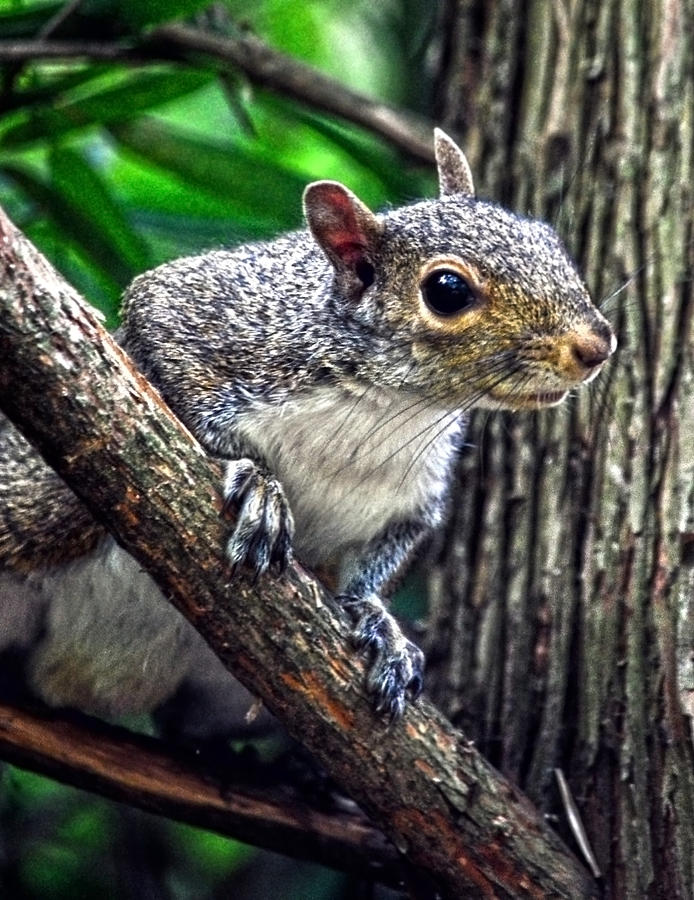 Squirrel Photograph - Peanut? Treat? by Sandi OReilly