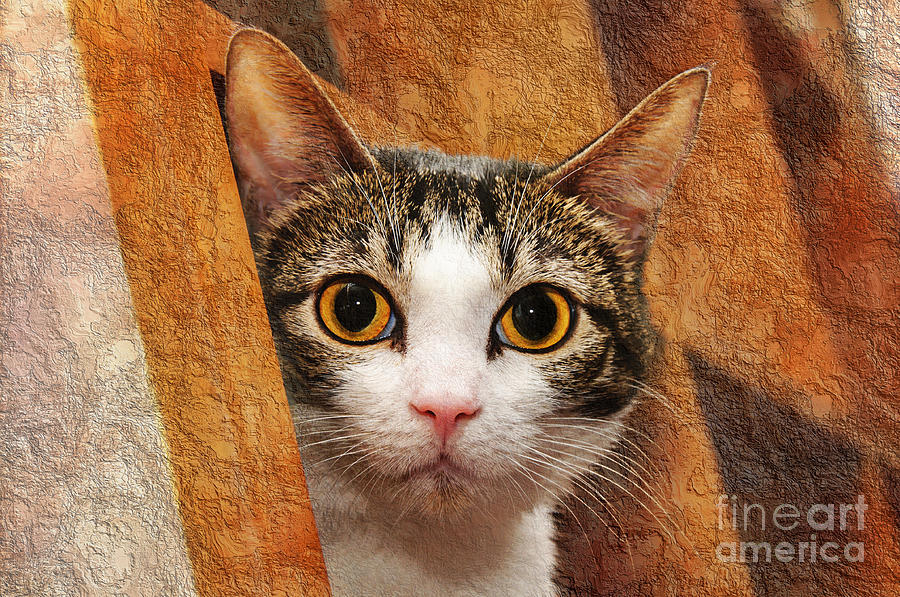Peek A Boo I See You Photograph  - Peek A Boo I See You Fine Art Print