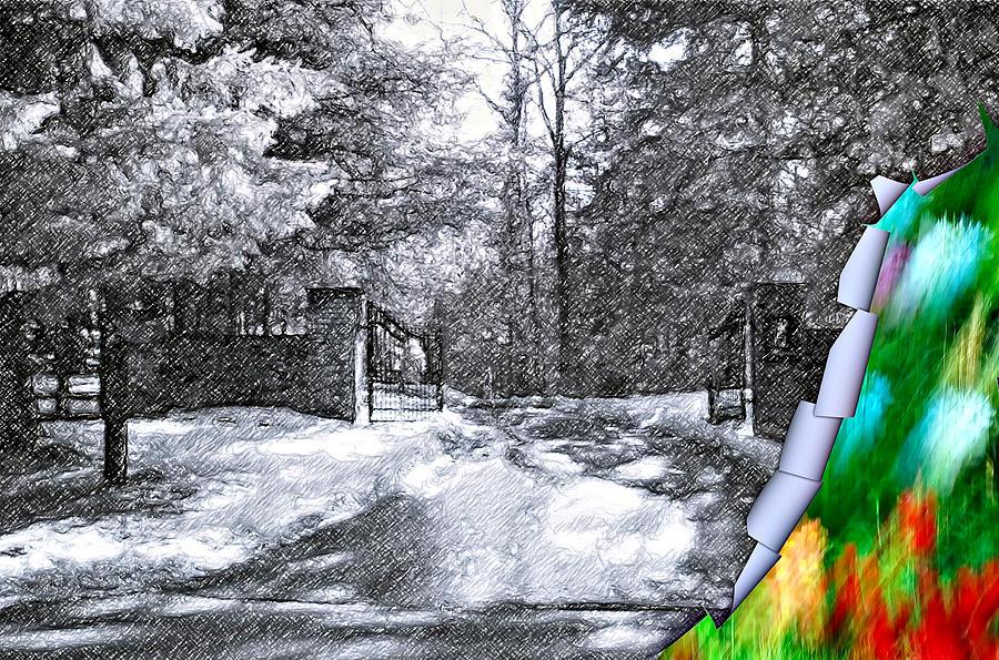 Peeling Winter Away 2 Photograph by Steve Harrington