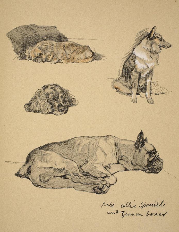 Peke, Collie, Spaniel And German Boxer Drawing