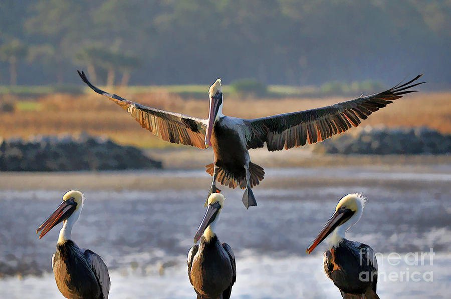 Pelican Coming In For Landing Photograph by Dan Friend