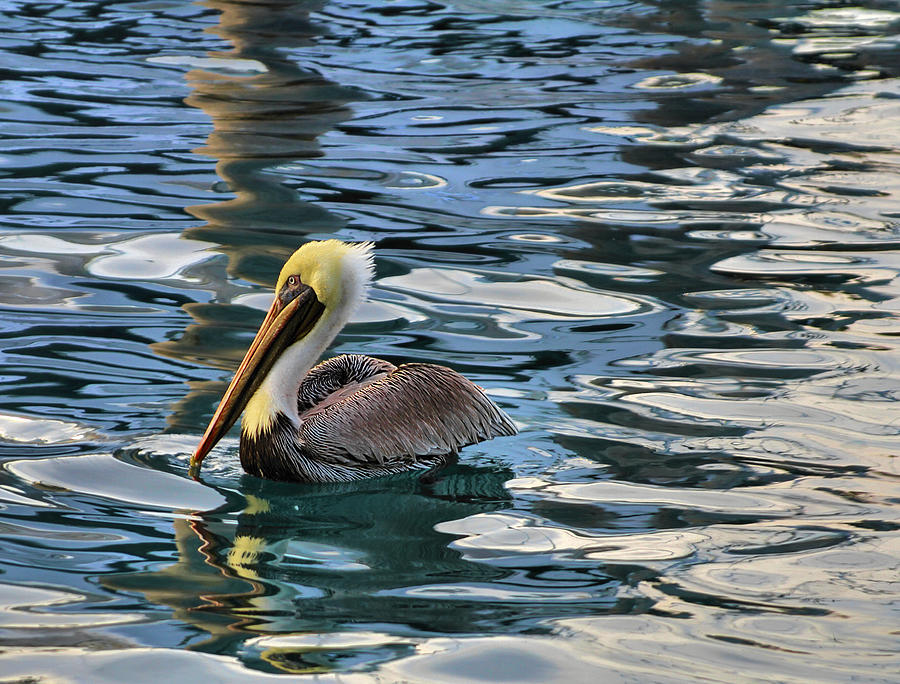Pelican Monet Photograph