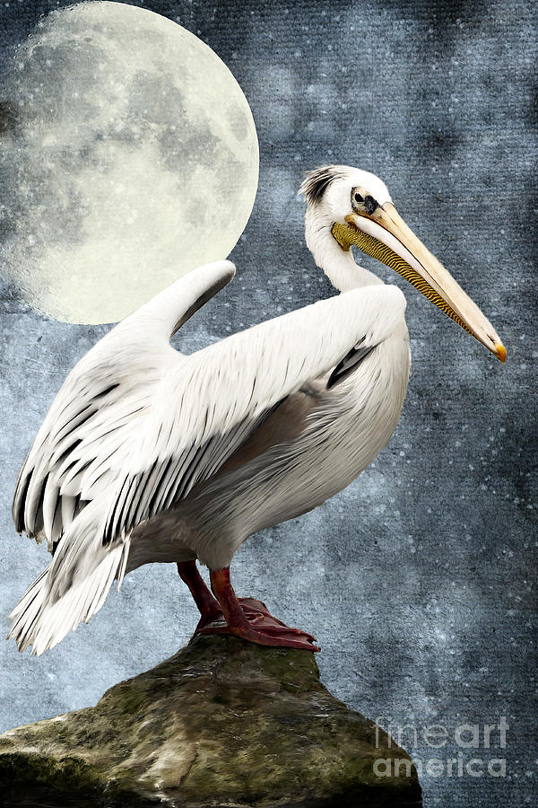 Pelican Night Digital Art  - Pelican Night Fine Art Print