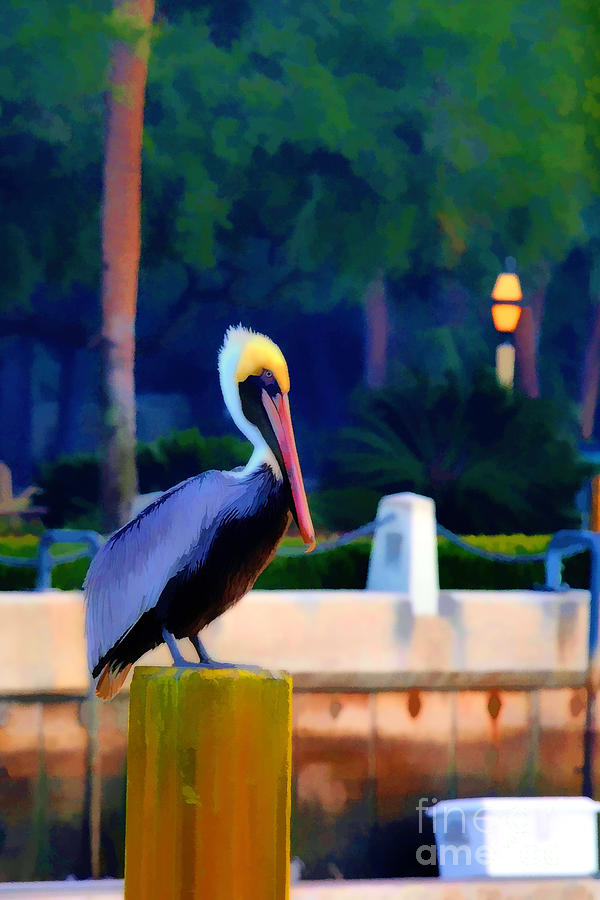 Pelican On Post Artistic Photograph  - Pelican On Post Artistic Fine Art Print