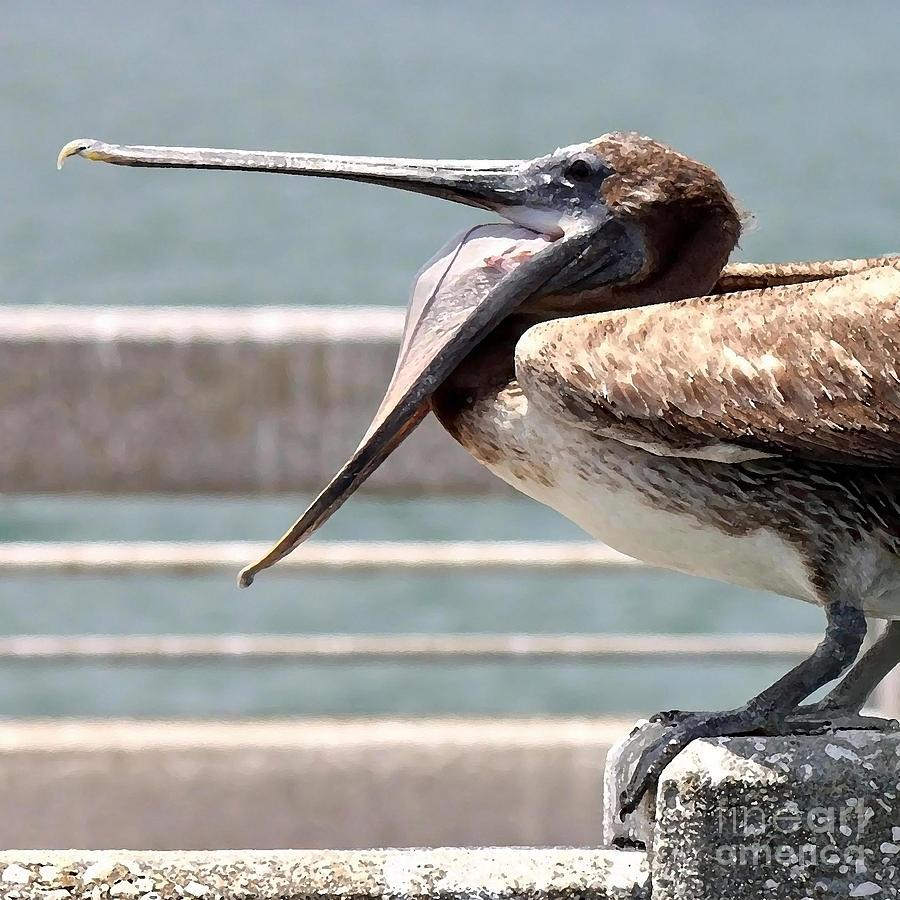 Pelican Photograph - Pelican Yawn - Digital Painting by Carol Groenen