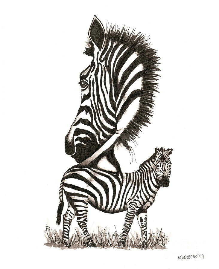 Pen And Ink Drawing Of Zebra In Black And White Drawing  - Pen And Ink Drawing Of Zebra In Black And White Fine Art Print