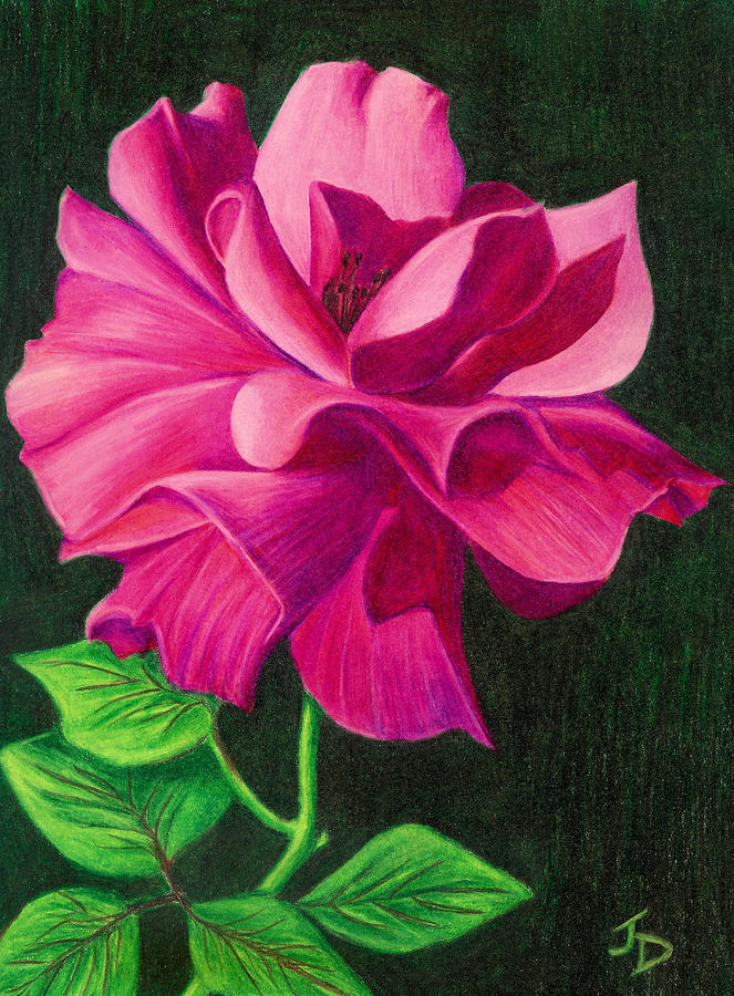 Pencil Rose Drawing By Janice Dunbar