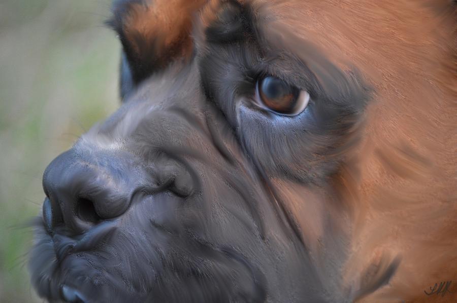 Pensive Boxer Photograph