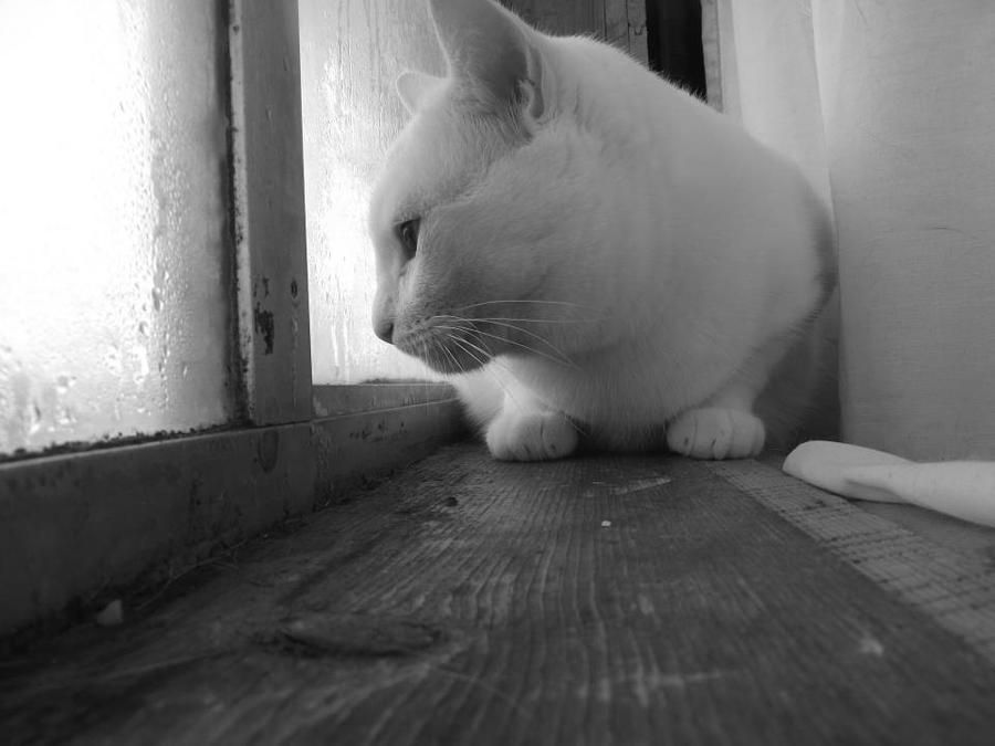 Pensive Snobi Photograph