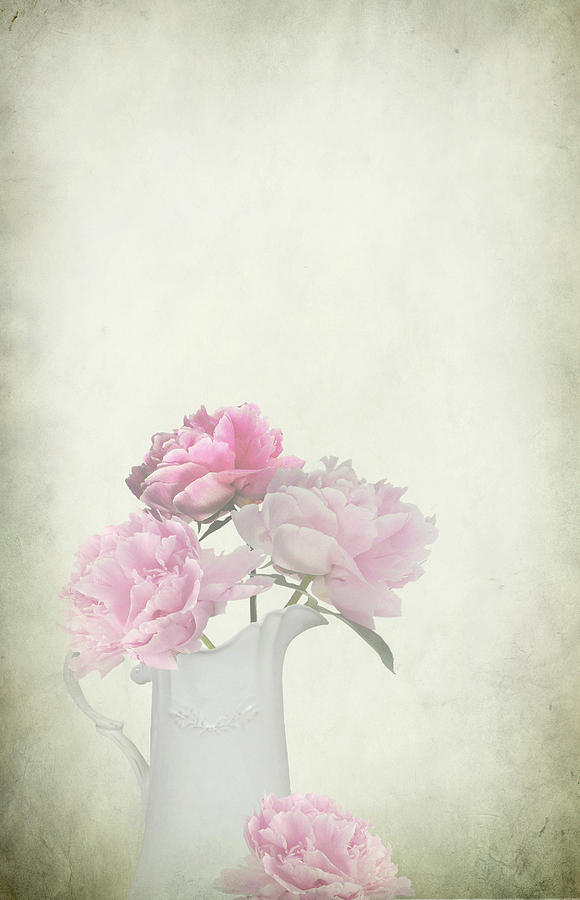 Peonies In A Jug Photograph