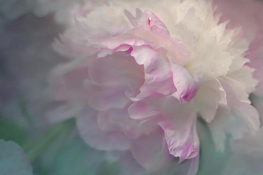 Flower Photograph - Peony by Jeff Burgess