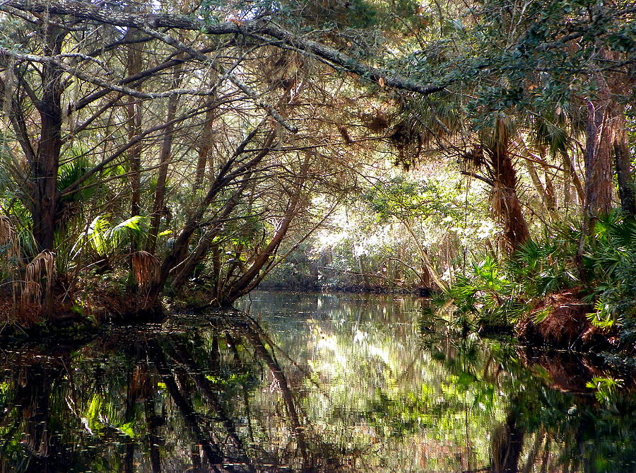 Pepper Creek Photograph - Pepper Creek by Sheri McLeroy