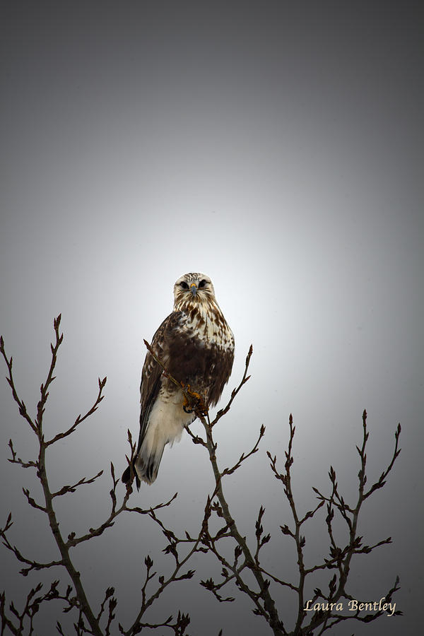 Perched On The Prairies Photograph  - Perched On The Prairies Fine Art Print