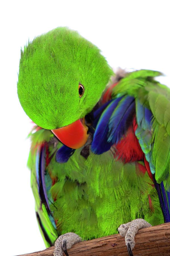 Perfect Bird Photograph