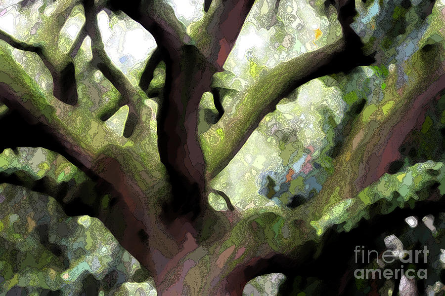 Perfect Climbing Tree  Photograph  - Perfect Climbing Tree  Fine Art Print