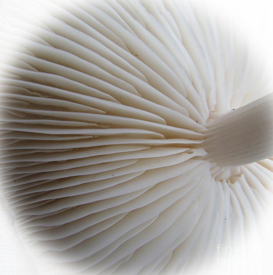 Perfect Round White Mushroom Photograph